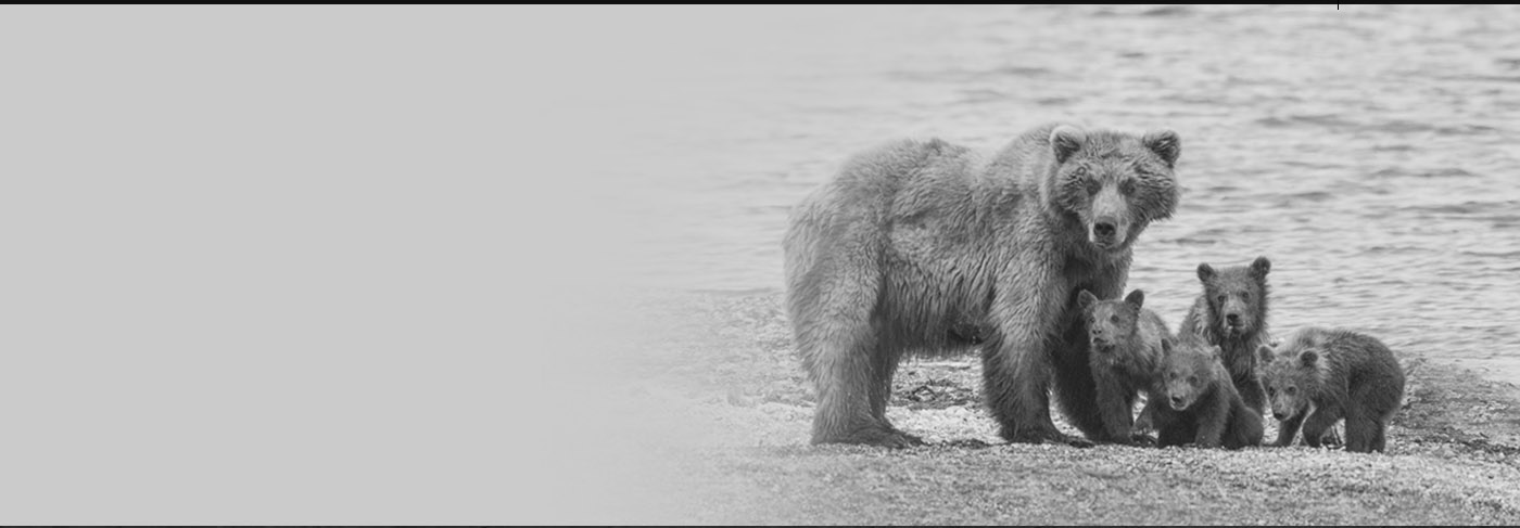 Bear Awareness Safety Certification Online Velocity Training Canada